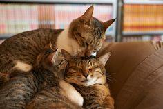 omotenashi  CATS