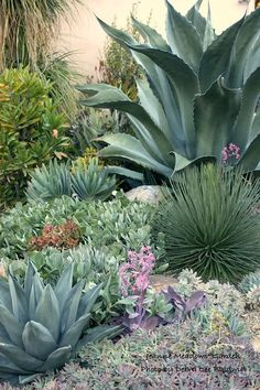 "Xeriscaping, Drought Tolerant Land Cover Native Agave Garden ""native to the southern and western United States, Mexico and central and tropical South America"" Source by daffodilmoon. Succulent Landscaping, Front Yard Landscaping, Succulents Garden, Backyard Landscaping, Landscaping Ideas, Backyard Ideas, Tropical Landscaping, Colorado Landscaping, High Desert Landscaping"