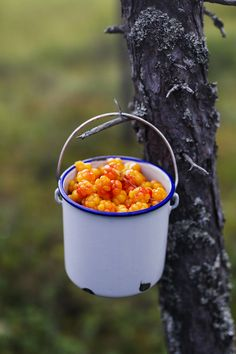 Hjortron, swedish fens yellow gold, just like lingon berries is the red gold of the forests in Sweden. Vegan Dishes, Fruits And Vegetables, Farm Life, Country Life, Life Is Beautiful, Fresh Fruit, Scandinavian, Food Photography, Stuffed Mushrooms