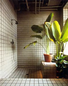 Like the idea of plants in bathroom