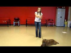 10 WEEKS TO CGC (lesson 2):  Learn how to train your dog for the Canine Good Citizen test.