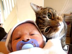 Cat guarding the new born baby