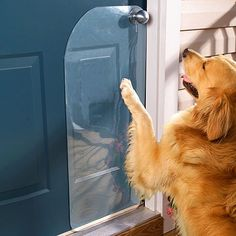 Genius Hacks That Make Having A Dog So Much Easier If your dog scratches the door to go out, use a door protector to minimize damages.If your dog scratches the door to go out, use a door protector to minimize damages. Dog Rooms, Golden Retriever, Dog Houses, Dyi Dog House, Dog Care, Dog Owners, Dog Training, Safety Training, Training Tips