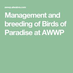Management and breeding of Birds of Paradise at AWWP