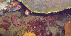 Fish during a dive trip - scuba diving