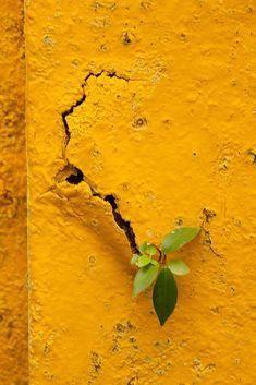 l mellow yellow l Jaune Orange, Yellow Walls, Yellow Doors, Yellow Brick Road, Yellow Submarine, Foto Art, Shades Of Yellow, Colour Yellow, Yellow Art