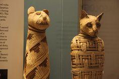 Por que os gatos eram sagrados para os egípcios? https://mundoestranho.abril.com.br/cultura/por-que-os-gatos-eram-sagrados-para-os-egipcios/#