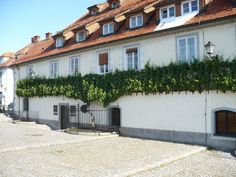 the old vine, Maribor