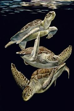 Cancun Caper by Sally Maxwell ~ sea turtles