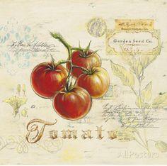 Tuscan Tomato Posters par Angela Staehling sur AllPosters.fr