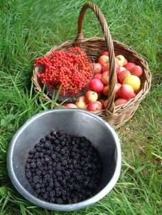 Wild food seasons month by month