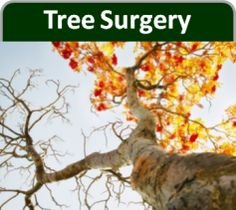 #Tree #Surgeons #Essex. Wychwood tree surgeons provide tree surgery, tree felling, tree removal and all types of domestic and commercial tree works in London and Essex.  Wychwood tree surgeons emergency tree surgeons London, 24 hour call out for London.