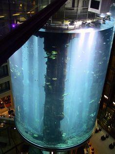The Largest Public Aquarium in the World