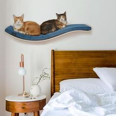 wave shelf wave perch cat bed wall mounted she shelf for cosy and dozy shelf pet supplies nesting supplies cat accessories cat bed nice bed All cats love to chill; it's in their nature and this CHILL DeLUXE wave shelf is sure to be adored by your feline Cat Wall Shelves, Wood Shelves, Shelves For Cats, Wall Cupboards, Cat Gifts, Cat Lover Gifts, Cat Perch, Bed Platform, Cat Room