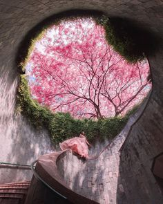 Beautiful Places To Travel, Wonderful Places, Visit Singapore, Honeymoon Places, Pink Trees, Friends Image, Spring Blooms, Natural Wonders, 2d Art