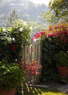 Garden gate, climbing roses on fence