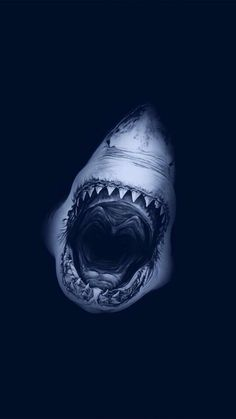 The Great White Shark, arguably the ocean's most highly developed and successful top of the food chain predator. McC