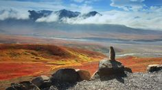 Bing Image Archive: Arctic ground squirrel, Denali National Park and Preserve, Alaska (© Ning Liu)(Bing Australia)