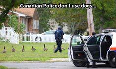 <b>Funny</b> <b>Canadian</b> Police Pic - SlightlyQualified.com <b>Funny</b> Memes