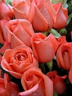 I carried roses like these in my wedding <3  That must have been beautiful--these are outstanding