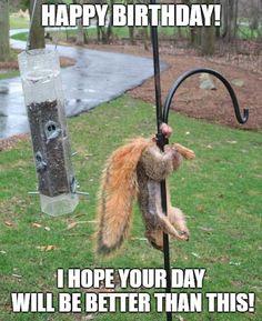 Having a bad day? Think again. Funny Animal Pictures, Best Funny Pictures, Funny Photos, Funny Animals, Squirrel Pictures, Meme Pics, Funny Pix, Funny Stuff, 50th Birthday Meme