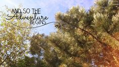 And so the adventure begins, #quote #explore #background #tree #free