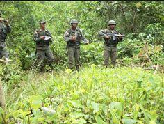 NACIONAL. Perú redujo 17% cultivos de hoja de coca en el 2013, afirma ONU http://hbanoticias.com/9206