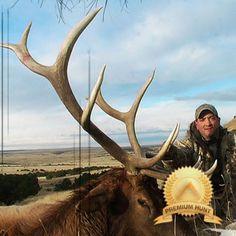 Colorado elk hunts
