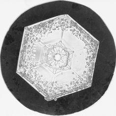 Snowflake Study | Flickr - Photo Sharing!