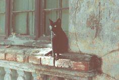 outro gato, sobre a já ruína de uma casinha há mto tempo destruída, rua são manoel, porto alegre, 1991.