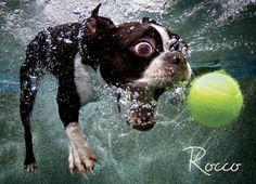 Cachorro pegando bola dentro da agua 10 62b49ce8