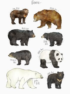 Art And Illustration, Illustrations Posters, Polar Bear Illustration, Animal Illustrations, Animal Drawings, Art Drawings, Drawings Of Bears, Art D'ours, Spectacled Bear