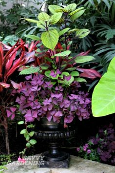 Use this container gardening cheat-sheet to design four gorgeous, colorful container gardens for your patio, porch, or deck. 12 Easy DIY Container Garden Designs you might consider for your porch Container Flowers, Container Plants, Gemüseanbau In Kübeln, Dark Color Palette, Container Gardening Vegetables, Annual Flowers, Backyard, Patio, Shade Garden