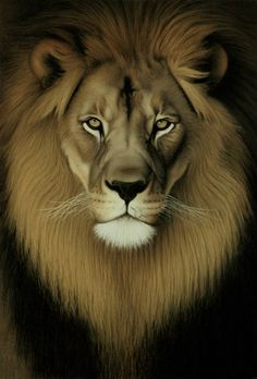 This is vision of the Lion of Judah as revealed to me. A lion appeared in the skies. I had a voice say unto me, 'the Lion of Judah'. Lion And Lioness, Leo Lion, Leo Tattoos, Future Tattoos, King Tattoos, Tigh Tattoo, Lion And Lamb, Lion Love, Tribe Of Judah