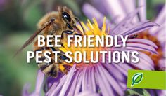 Bee friendly pest solutions #PalmersGardenCentre