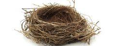 Empty-nest-618x250.jpg (618×250)
