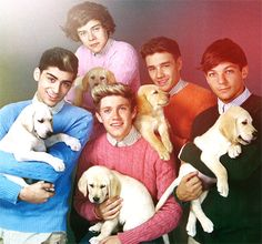 one direction and puppies. i mean, i'm not a big 1-d fan, but those puppies are adorable.