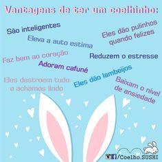 VANTAGENS DE TER UM COELHINHO:  #Coelhos  #Coelho  #CoelhoAnao #Bunny  #Bunnys #MyBunnySuhi #BunnySushi #Bunnie  #Bunnies #BunniesOfInstagram  #CoelhoSushi  #CoelhoSushi13 #SushiMiniLop  #MiniCoelho  #MiniCoelhos  #Rabbit #Rabbits