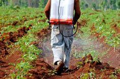 Farmer Alleges Monsanto Weed Killer Caused Non-Hodgkin's Lymphoma Natural News, Natural Health, University Of Scranton, Non Hodgkins Lymphoma, Hodgkin's Lymphoma, Weed Killer, Environmental Issues, Long Exposure, Heart Disease