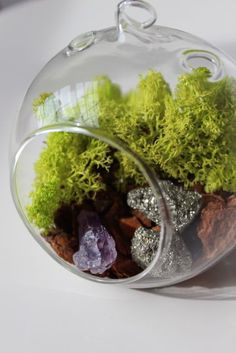 DIY Terrarium Kit makes it fun to bring in a bit of the outdoors