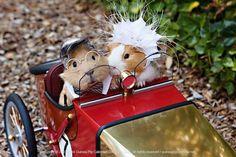 So cute guinea pigs!