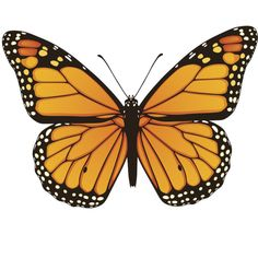 Vector Illustration Of Hand Drawn Monarch Butterfly Isolated On White Background Clip Art Libres De Droits , Vecteurs Et Illustration. Butterfly Drawing, Butterfly Painting, Butterfly Wallpaper, Blue Butterfly, Monarch Butterfly Tattoo, Butterfly Stencil, Butterfly Illustration, Butterfly Template, Butterfly Crafts