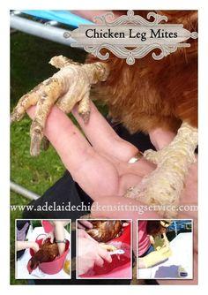 Chicken Leg Mites - Simple Fix