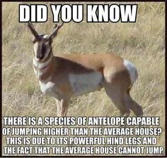 Did You Know That There Is A Species Of Antelope That Can Jump Higher Than The Average House? - Funny Animal Pictures With Captions - Very Funny Cats - Cute Kitty Cat - Wild Animals - Dogs