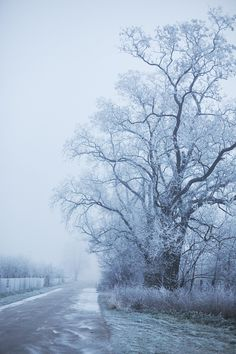 Winter is back (by *Nishe) Psychological Effects Of Color, Dusk Sky, Polar Night, Weather Seasons, Winter Images, Scenery Photography, Winter Snow, Winter Blue, Winter Solstice