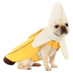 We tried to dress Scout like Yoda last year for Halloween but the costume did not work out very well so it was a bust. Maybe this year we will try this banana costume? This made me laugh. Cream French Bulldog, Baby French Bulldog, French Bulldogs, English Bulldogs, Puppy Halloween Costumes, Pet Costumes, Bulldog Costume, Chien Halloween, Banana Costume