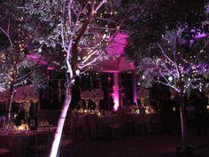 http://eventaccomplished.com/wp-content/uploads/2013/01/meadowlark-botanical-garden-wedding-lighting.jpg