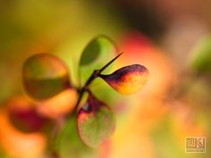 Colourful fall plant Nature details Orange by OverTheRainbowPrints