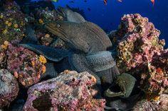 Foto Galápagos, meraviglie oceaniche - 3 di 8 - National Geographic
