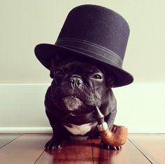Le chien le plus célèbre d'Instagram